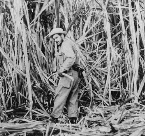 Che Guevara trabalhando em uma fazenda de cana-de-açúcar
